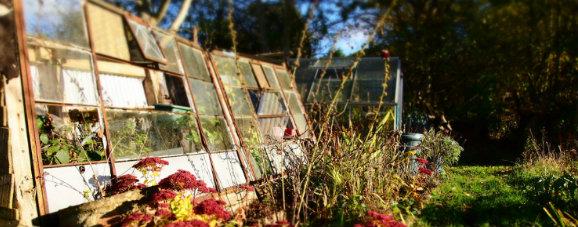 greenhouse_b